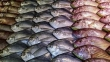 Fisheries Ministry aims to increase annual earnings from fish exports to US$ 1.5 billion